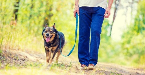 leashed doggo on the trail