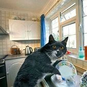 a cat washing dishes