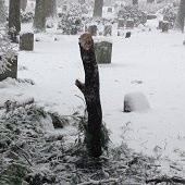 a fallen branch in a snow covered cemetery