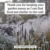 messy gardens are great for wildlife