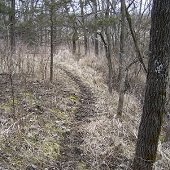 a deer path in the ground