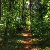 a forest trail canopied by trees