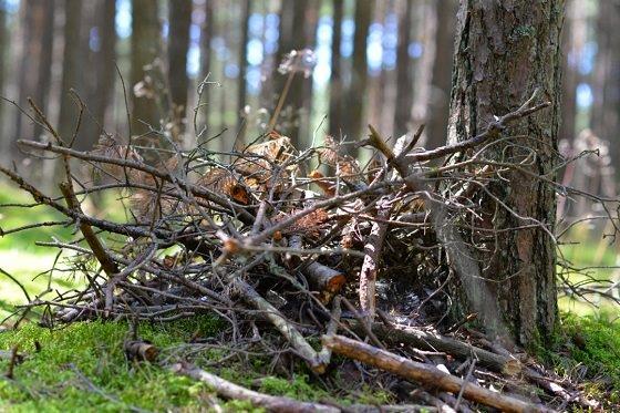 a backyard brush pile