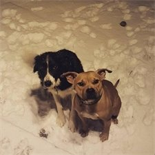 two cold dogs sitting in snow