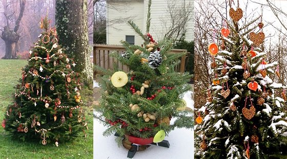 three christmas trees with food for wildlife as decorations