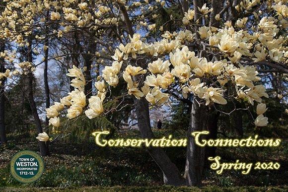magnolia banner