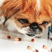 a dog eating pills