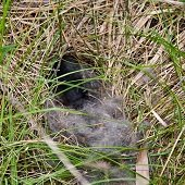 a rabbit nest in the grass
