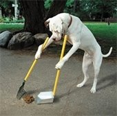 a dog scooping its own waste