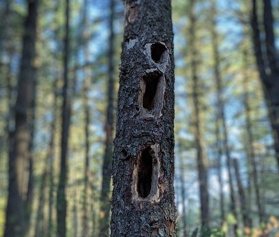 dead trees are not dead, they are teeming with life