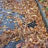 autumn leaves in stormdrain