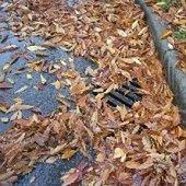 autumn leaves in stormdrain