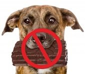 red strike on a dog with chocolate bar in its mouth