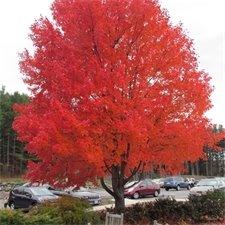 Dazzling tree