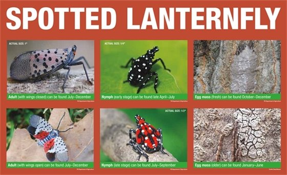 different images depicting the lifecycle of insect